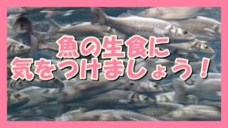 サムネ191116魚の生食に気をつけましょう!